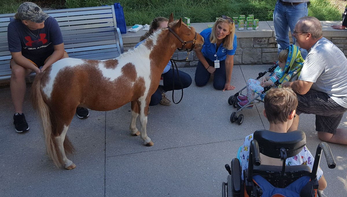 AppleJack, a miniature therapy horse, visiting Mercy Kids on the plaza.