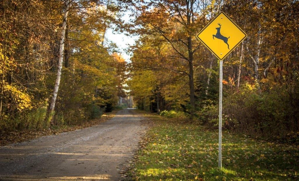 Drivers beware: the number of deer related accidents spike in the fall, causing more than $1 billion in insured losses, according to the National Association of Insurance Commissioners and State Farm.